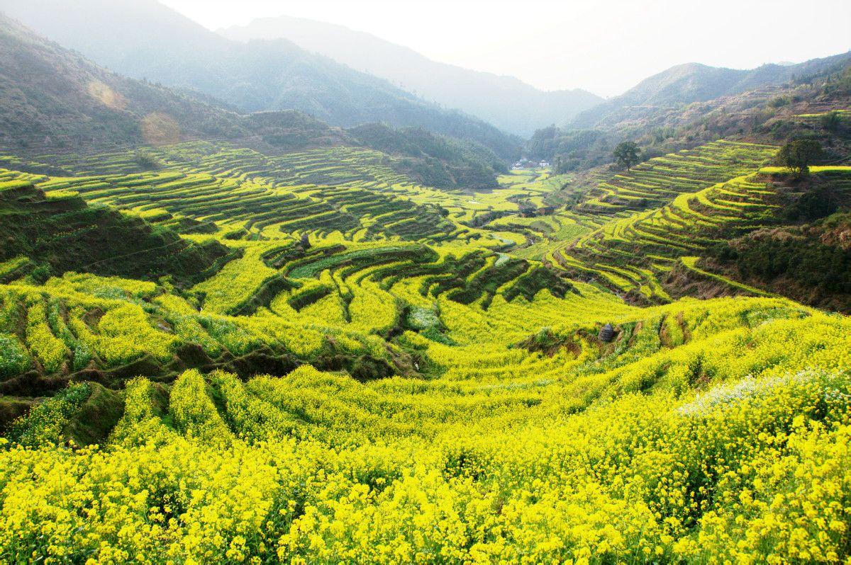 江岭的油菜花最具特色,江湾则以古老的徽派建筑及秀丽的山水风景为最